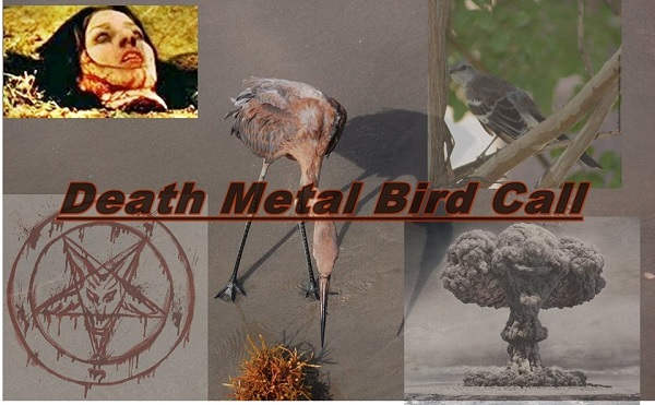 Death Metal Bird Song